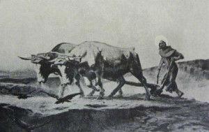 San Francesco al lavoro dei campi - olio di T.Chartrand